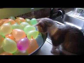 Munchkin Cat Pops Water Balloons